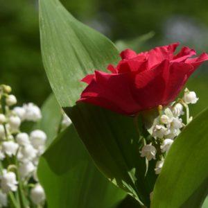 muguet et rose