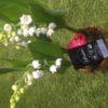muguet racine 3 plants