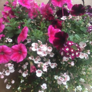 potée fleurie