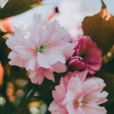 fleur déconfinement